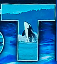 Orca in the T